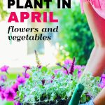 what to plant in april